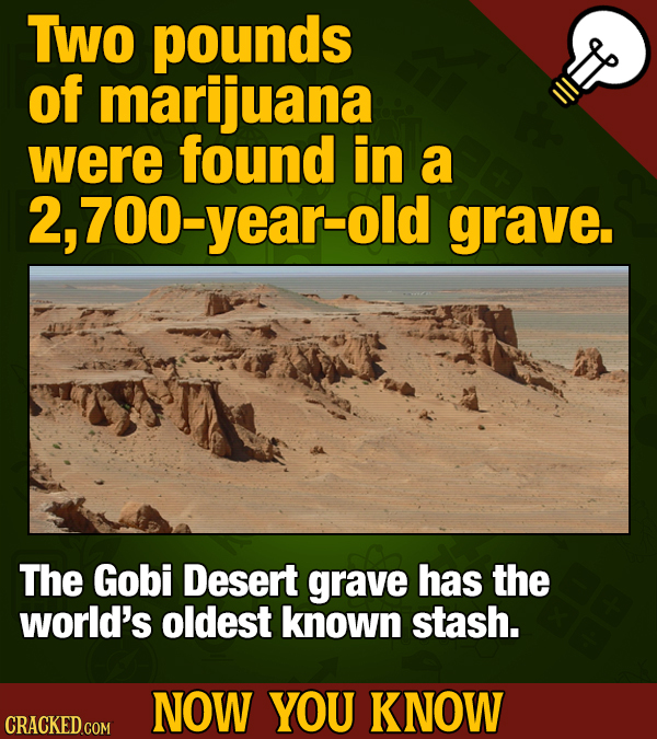 TWO pounds of marijuana were found in a 2,700-year-old grave. The Gobi Desert grave has the world's oldest known stash. NOW YOU KNOW CRACKED GOM