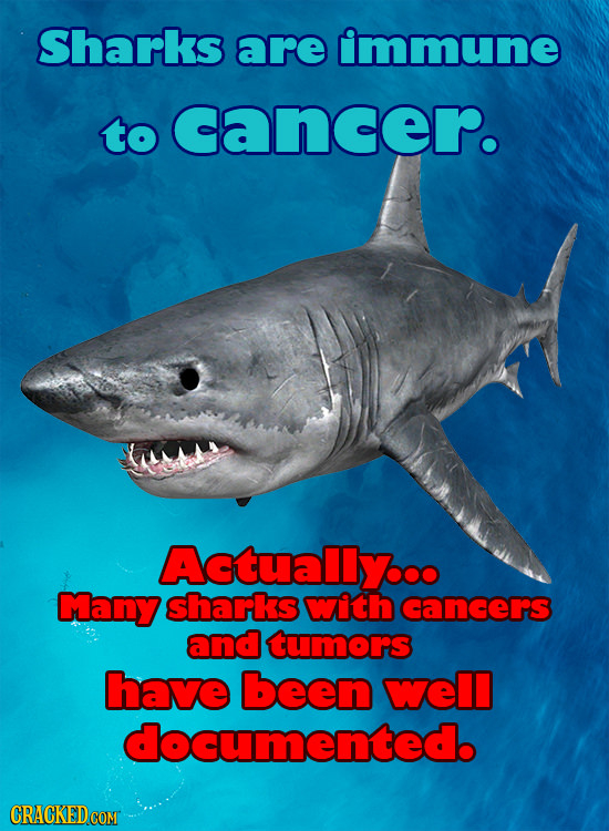 Sharks are immune to cancer. AEtuallyoo Many shariks with cangers and tumors have been well documented.