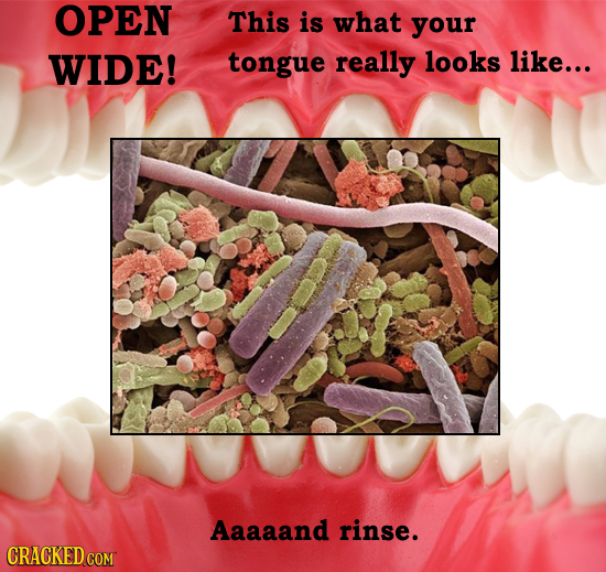26 Microscopic Horrors In and Around Your House Right Now