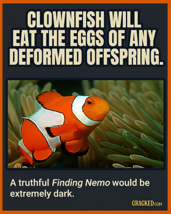 CLOWNFISH WILL EAT THE EGGS OF ANY DEFORMED OFFSPRING. A truthful Finding Nemo would be extremely dark. CRACKEDCON
