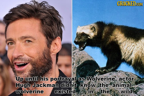 CRACKED COM Up until his portrayal as Wolverine, actor Hugh Jackman didn't know the animal wolverine existed in the wild