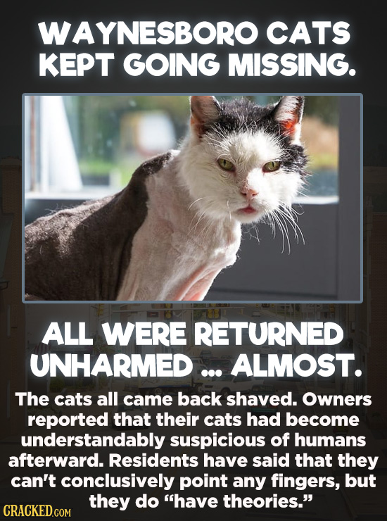 20 Bizarre Crimes You Won't Believe Actually Happened - Over the course of four months in 2017, at least seven cats in Waynesboro, Virginia were abduc