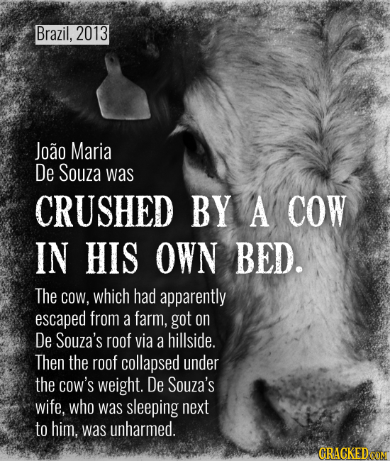 Brazil, 2013 Joao Maria De Souza was CRUSHED BY A COW IN HIS OWN BED. The COW, which had apparently escaped from a farm, got on De Souza's roof via a