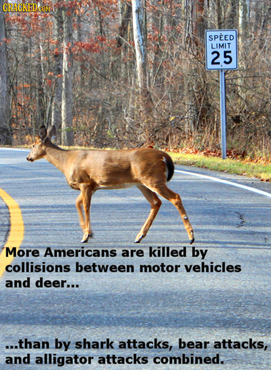 SPEED LIMIT 25 More Americans are killed by collisions between motor vehicles and deer... ...than by shark attacks, bear attacks, and alligator attack