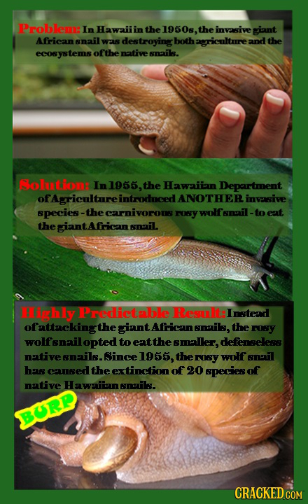 Problem: In Hawaiit in the 1950s, theinvasive giant Afirican snail w lestroying both griculture and the ecos y8 tems ofthe naativesnaaills. Colutlone