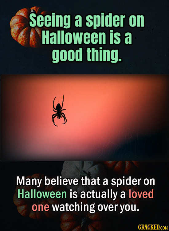 Seeing a spider on Halloween is a good thing. Many believe that a spider on Halloween is actually a loved one watching over you.