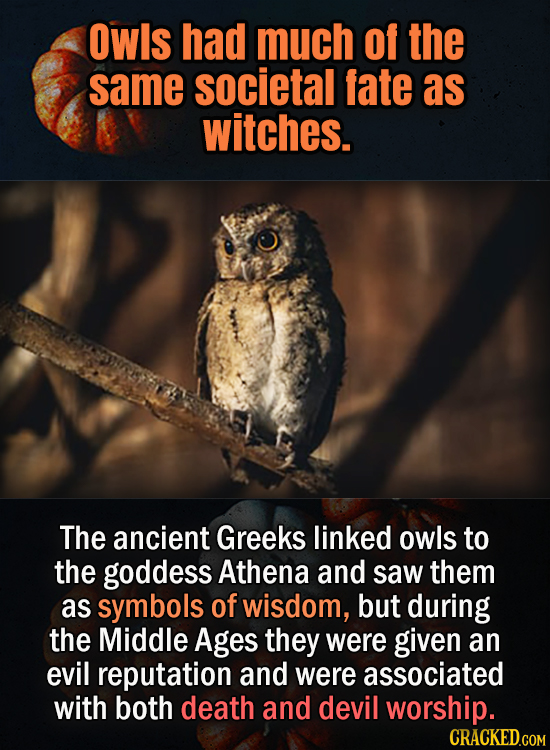 owls had much of the same societal fate as witches. The ancient Greeks linked owls to the goddess Athena and saw them as symbols of wisdom, but during