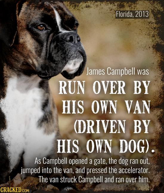 Florida, 2013 James Campbell was RUN OVER BY HIS OWN VAN (DRIVEN BY HIS OWN DOG). As Campbell opened a gate, the dog ran out, jumped into the van, and