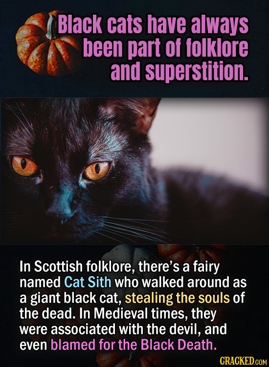 Black cats have always been part of folklore and superstition. In Scottish folklore, there's a fairy named Cat Sith who walked around as a giant black