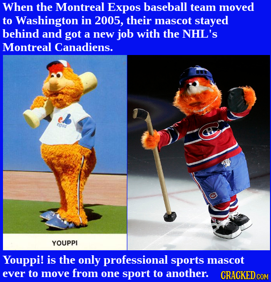 When the Montreal Expos baseball team moved to Washington in 2005, their mascot stayed behind and got a new job with the NHL'S Montreal Canadiens. a00