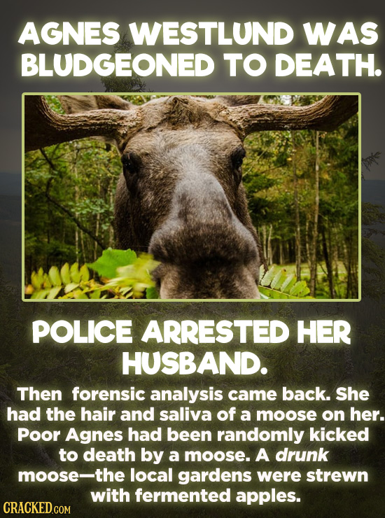 20 Bizarre Crimes You Won't Believe Actually Happened - On a dark September evening in 2008, 68-year-old Agnes Westlund was bludgeoned to death near a