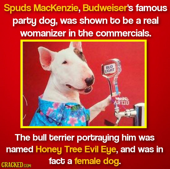 Spuds MacKenzie, Budweiser's famous party dog, was shown to be a real womanizer in the commercials. BUD LIGHT ATO The bull terrier portraying him was