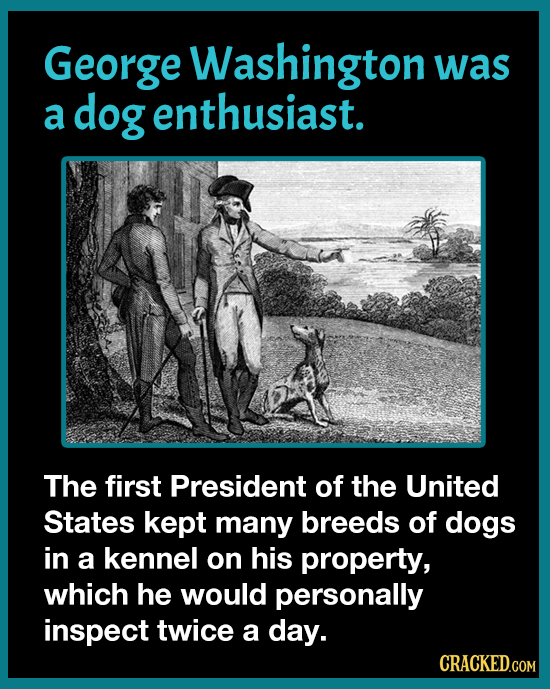 When Washington Called A Ceasefire Over A Dog
