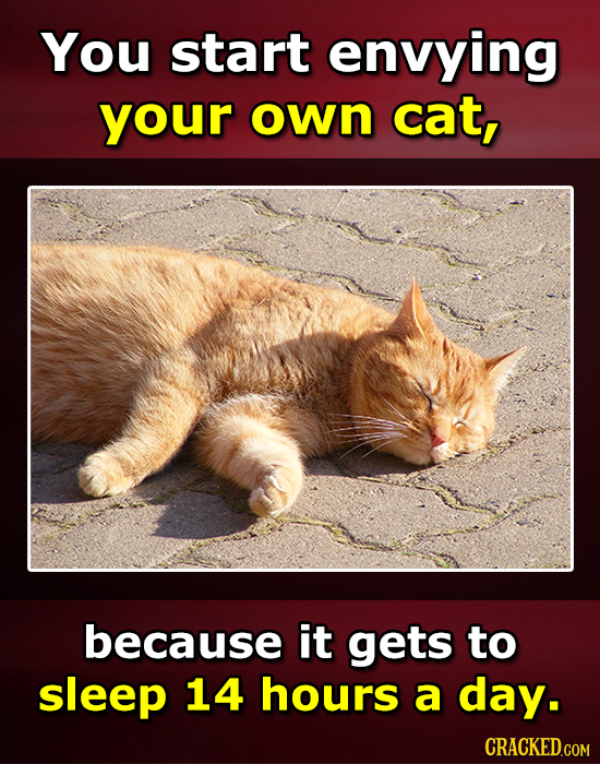 You start envying your own cat, because it gets to sleep 14 hours a day. CRACKED.COM