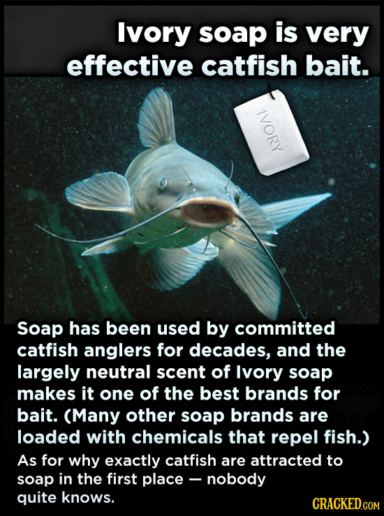 Ivory soap is very effective catfish bait. IVORY Soap has been used by committed catfish anglers for decades, and the largely neutral scent of lvory s