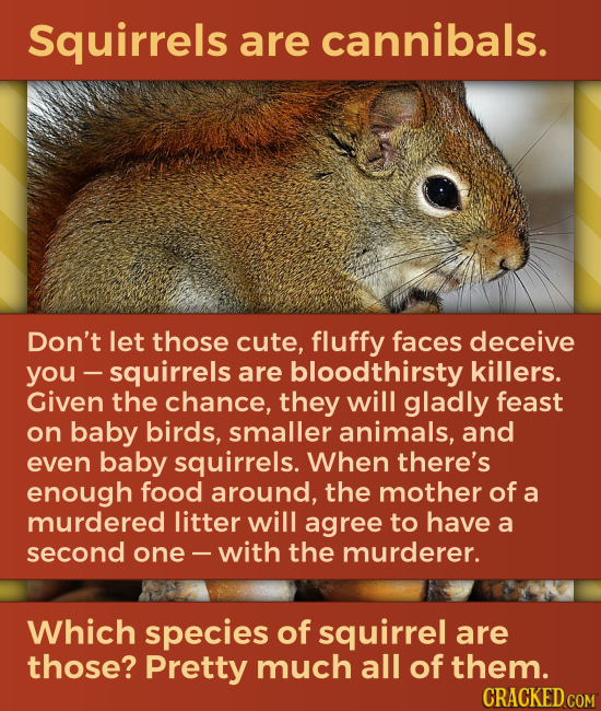 Squirrels are cannibals. Don't let those cute, fluffy faces deceive you -squirrels are bloodthirsty killers. Given the chance, they will gladly feast
