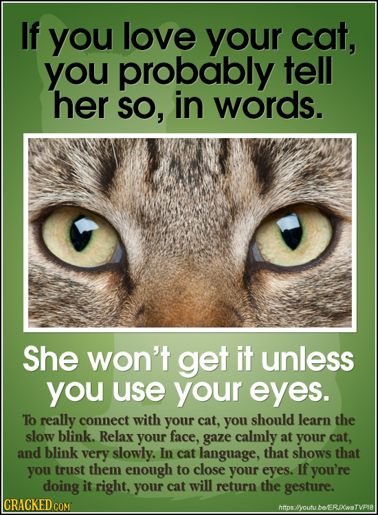 If you love your cat, you probably tell her SO, in words. She won't get it unless you use your eyes. To really connect with your cat, you should learn