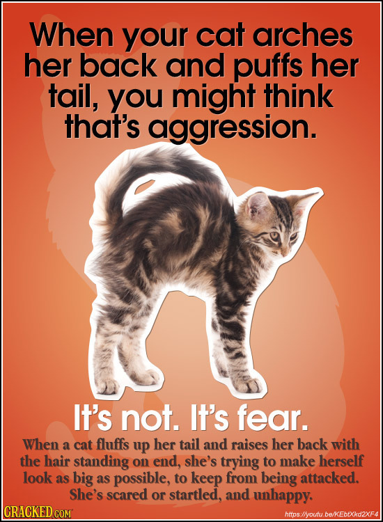 When your cat arches her back and puffs her tail, you might think that's aggression. It's not. It's fear. When a cat fluffs up her tail and raises her