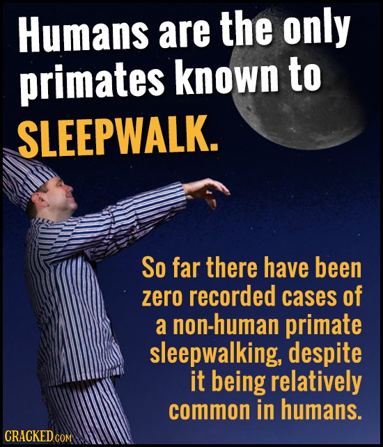 Humans are the only primates known to SLEEPWALK. So far there have been zero recorded cases of a non-human primate sleepwalking, despite it being rela