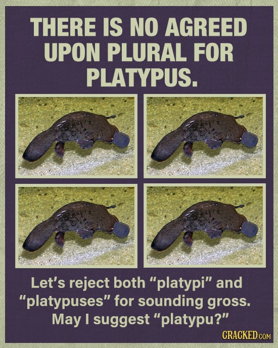 10 Ways The Platypus Is A Freak Of Nature
