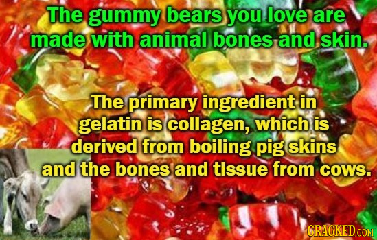 The gummy bears you love are made with animal bones and skin. The primary ingredient in gelatin is collagen, which is derived from boiling pig skins a