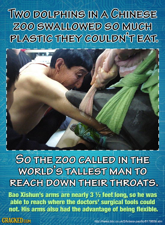 Two DOLPHINS IN A CHINESE ZOO SWALLOWED SO MUCH PLASTIC THEY COULDN'T EAT. So THE zoo CALLED IN THE WORLD'S TALLEST MAN TO REACH DOWN THEIR THROATS. B