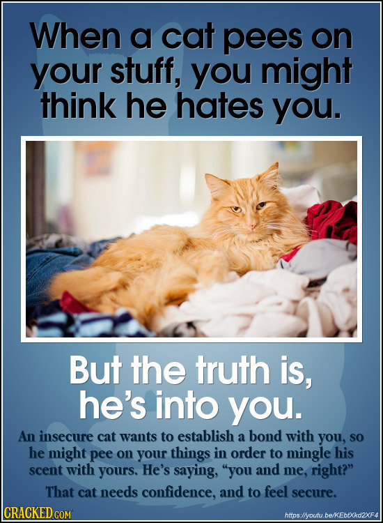 When a cat pees on your stuff, you might think he hates you. But the truth is, he's into you. An insecure cat wants to establish a bond with you, SO h