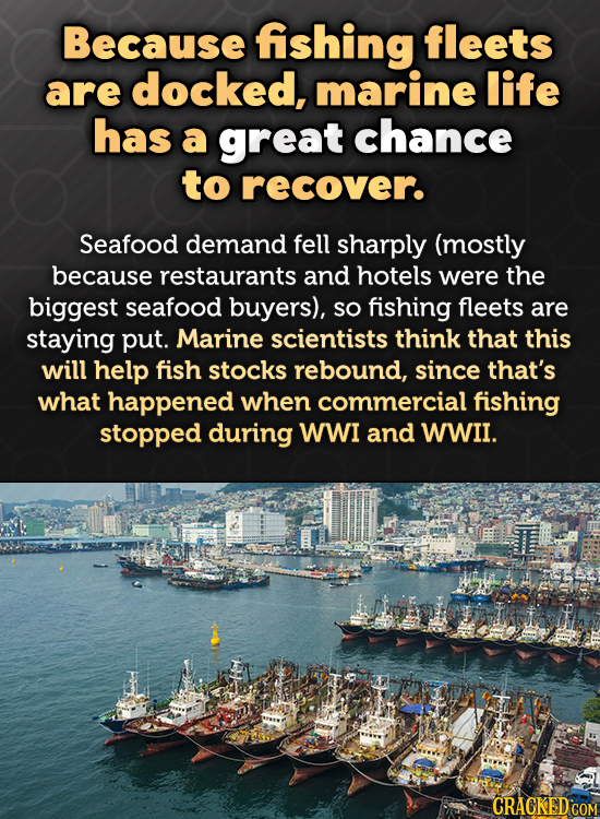 Because fishing fleets are docked, marine life has a great chance to recover. Seafood demand fell sharply (mostly because restaurants and hotels were