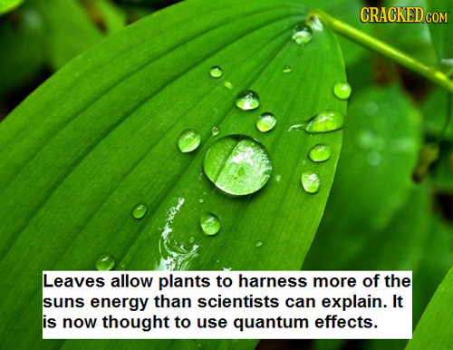 Leaves allow plants to harness more of the suns energy than scientists can explain. It is now thought to use quantum effects.