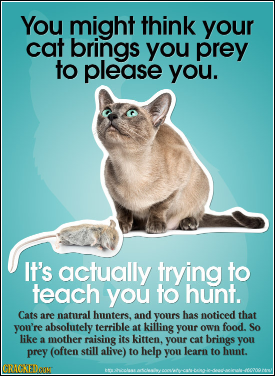 You might think your cat brings you prey to please you. It's actually trying to teach you to hunt. Cats are natural hunters, and yours has noticed tha