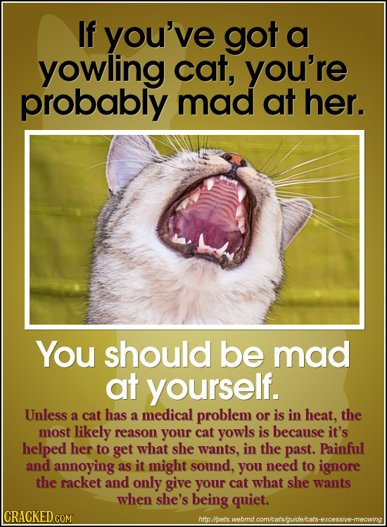 If you've got a yowling cat, you're probably mad at her. You should be mad at yourself. Unless cat has a medical problem the a or is in heat, most lik