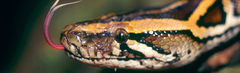 17 Amazing Animal Predators Straight From Your Nightmares