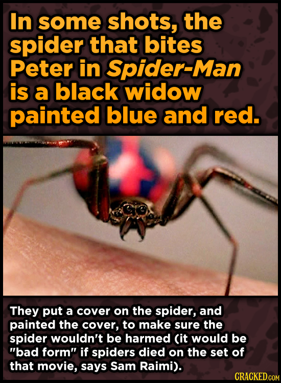 In some shots, the spider that bites Peter in Spider-Man is a black widow painted blue and red. They put a cover on the spider, and painted the cover,