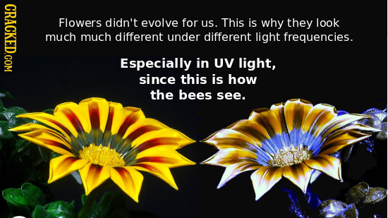 CRACKED.COM Flowers didn't evolve for us. This is why they look much much different under different light frequencies. Especially in UV light, since t