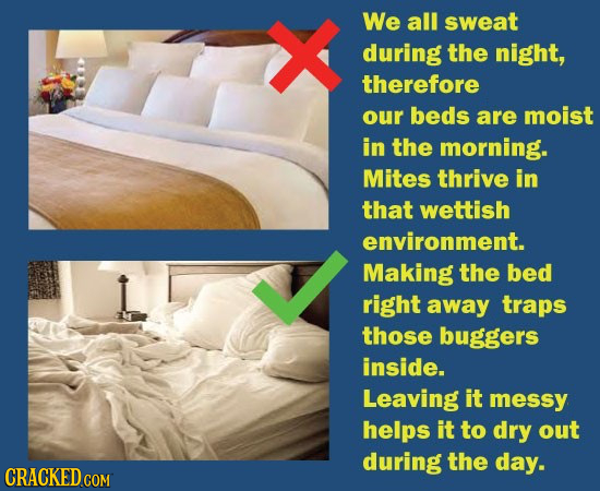 We all sweat during the night, therefore our beds are moist in the morning. Mites thrive in that wettish environment. Making the bed right away traps