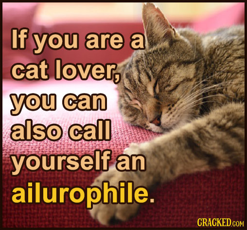 If you are a cat lover, you can also call yourself an ailurophile.