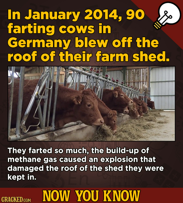 In January 2014, 90 13 Obscure, Cool Chunks Of Movie And General Trivia - farting COWS in Germany blew off the roof of their farm shed.