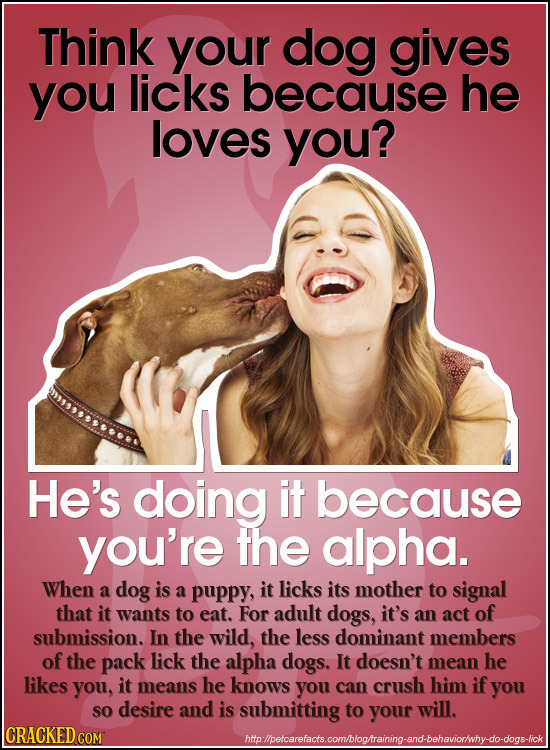 Think your dog gives you licks because he loves you? He's doing it because you're the alpha. When a dog is a puppy, it licks its mother to signal that