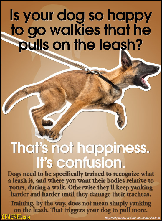 Is your dog SO happy to go walkies that he pulls on the leash? That's not happiness. IT'S confusion. Dogs need to be specifically trained to recognize