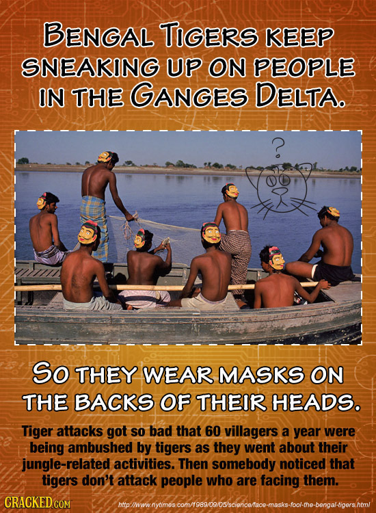 BENGAL TIGERS KEEP SNEAKING UP ON PEOPLE IN THE GANGES DELTA. So THEY WEAR MASKS ON THE BACKS OF THEIR HEADS. Tiger attacks got so bad that 60 village