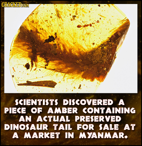 GRAGKEDON SCIENTITS DISCOVERED A PIECE OF AMBER CONTAINING AN ACTUAL PRESERVED DINOSAUR TAIL FOR SALE AT A MARKET IN MYANMAR.