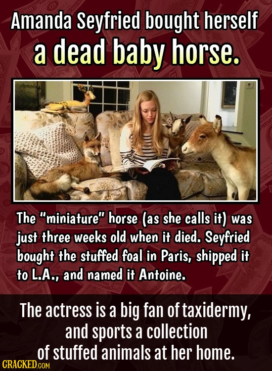 Amanda Seyfried bought herself a dead baby horse. The miniature horse (as she calls it) was just three weeks old when it died. Seyfried bought the s