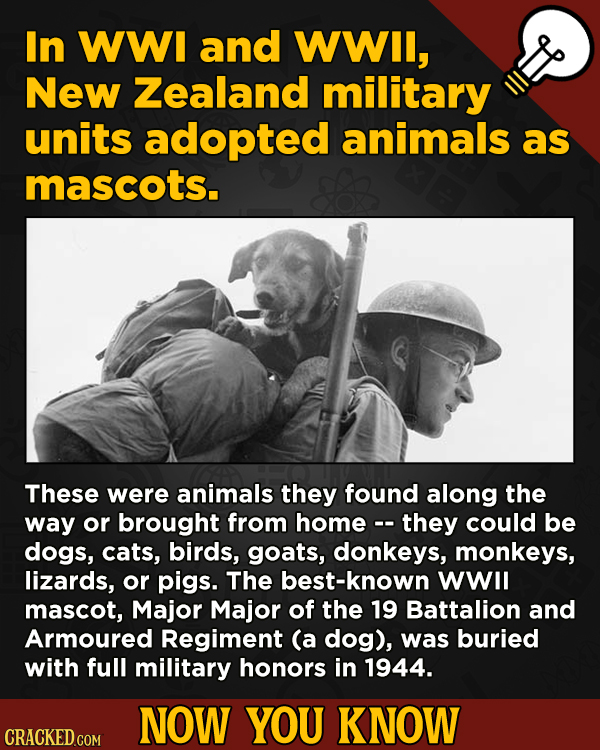 A Big Helping Of Little-Known About Movies (And Other Stuff)In WWI and WWIl, New Zealand military units adopted animals as mascots.