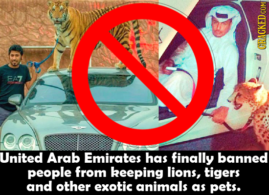 EA7 United Arab Emirates has finally banned people from keeping lions, tigers and other exotic animals as pets.