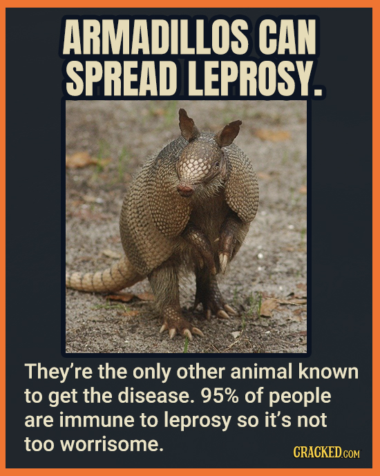 ARMADILLOS CAN SPREAD LEPROSY. They're the only other animal known to get the disease. 95% of people are immune to leprosy So it's not too worrisome.