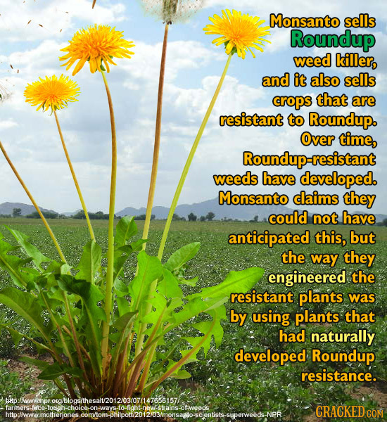 Monsanto sells Roundup weed killer, and it also sells crops that are resistant to Roundup. Over time, Roundup-resistant weeds have developed. Monsanto
