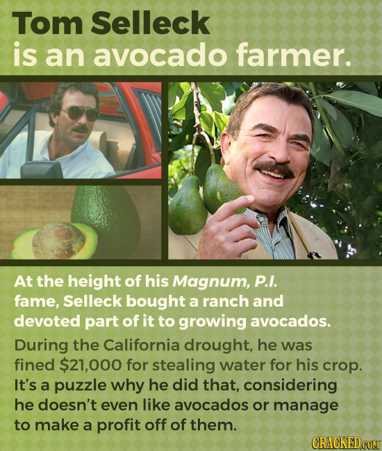 Tom Selleck is an avocado farmer. At the height of his Magnum, P.I. fame, Selleck bought a ranch and devoted part of it to growing avocados. During th