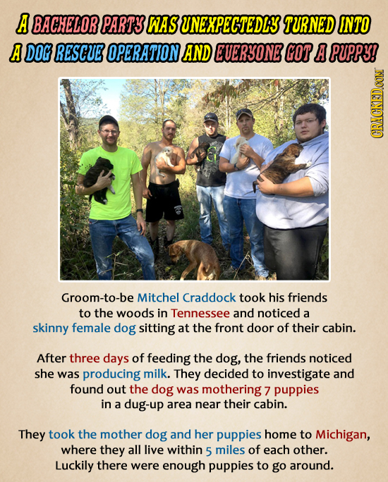 A BACHELORPARTS WAS UNEXPECTEDLY TURNED INTO A DOG RESCUE OPERATION AND EUERSONE GOT A PUPPY! GRAUI Groom-to-be Mitchel Craddock took his friends to t