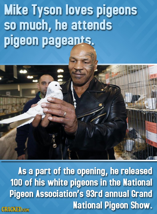 Mike Tyson loves pigeons SO much, he attends pigeon pageants. As a part of the opening, he released 100 of his white pigeons in the National Pigeon As