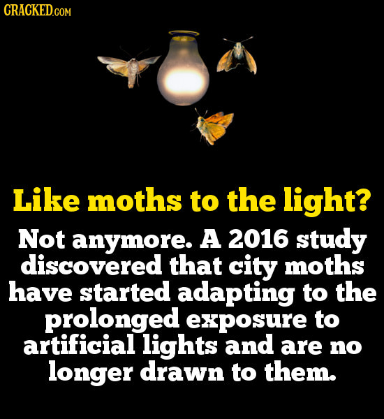 Like moths to the light? Not anymore. A 2016 study discovered that city moths have started adapting to the prolonged exposure to artificial lights and